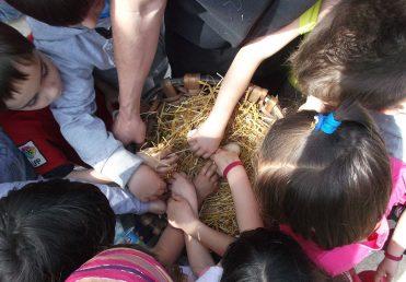 Visita de niños de primaria